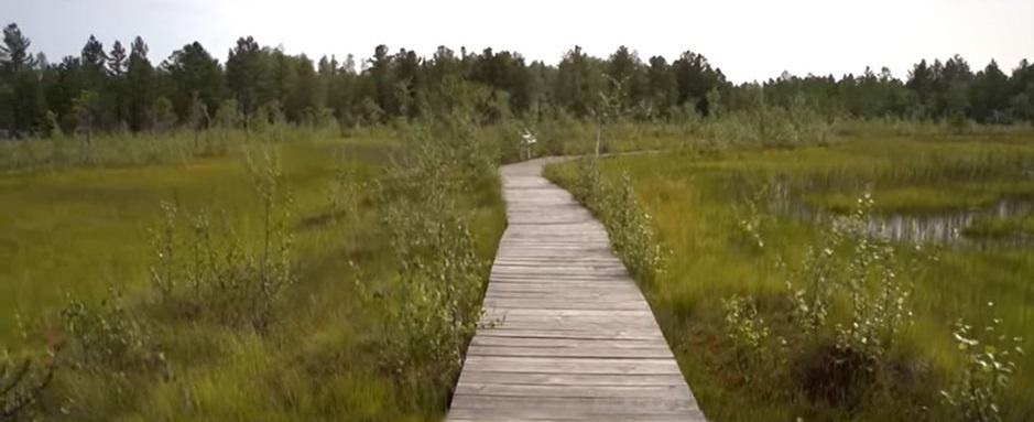 деревянная тропа через верховое болото
